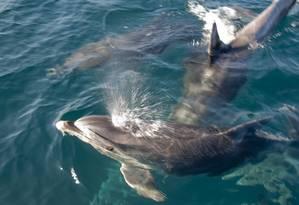 Na semana passada, o leitor Bruno Castaing notou o retorno de golfinhos ao mar de Ipanema. Eu-repórter recebe contribuições de problemas - ou soluções - ambientais do seu bairro Foto: Foto do leitor Bruno Castaing / Eu-repórter