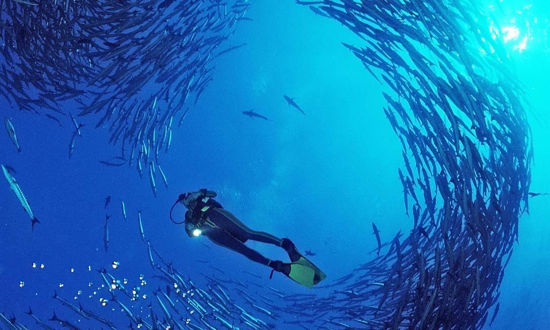 Oceanos têm grande biodiversidade, produzem oxigênio e absorvem gás carbônico que lançamos na atmosfera Foto: Latinstock