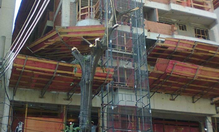 Árvore é praticamente destruída em obra de prédio na Rua Campoos Sales, na Tijuca Foto da leitora Paula Serpa / Eu-repórter
