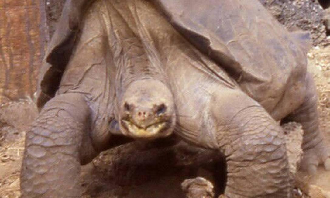 O 'solitário George', última tartaruga gigante da subespécie Chelonoidis Abingdoni Foto: Divulgação
