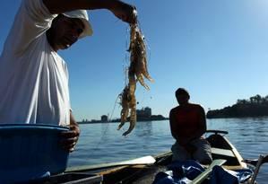 """Edson mostra camarões: """"A pesca artesanal está acabando na Baía"""" Foto: Custódio Coimbra / O Globo"""