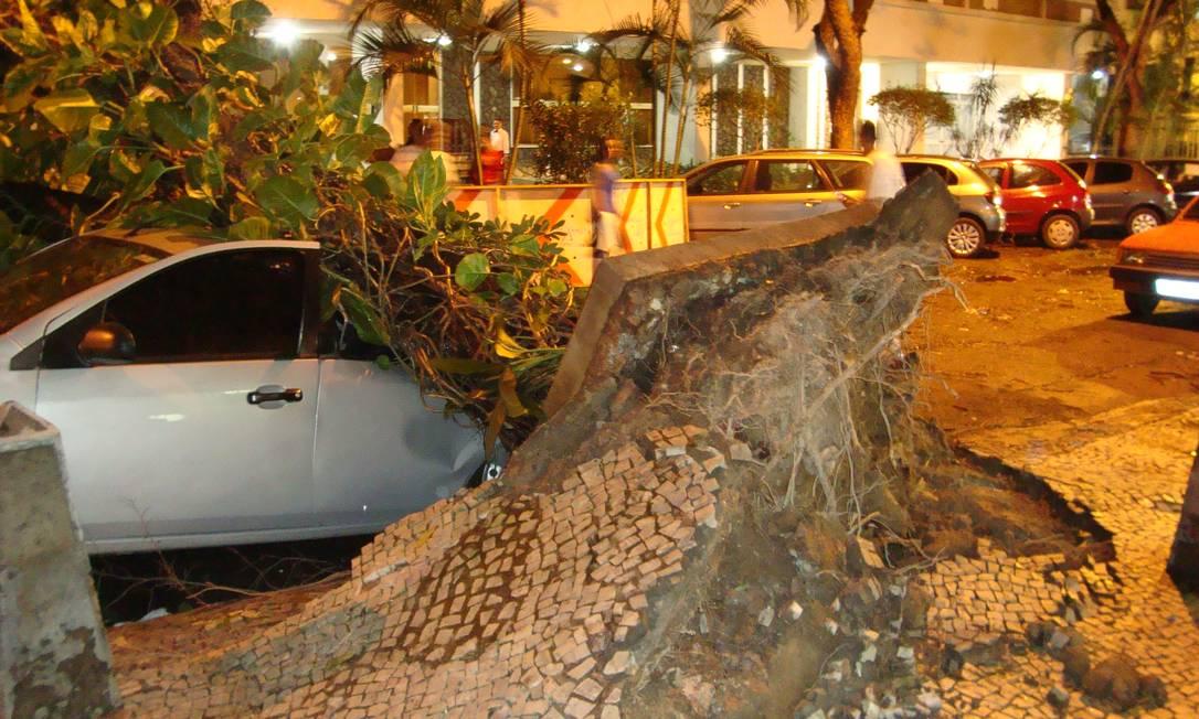 Ao cair, árvore levantou a calçada em mais de um metro Foto do leitor Fernando Relvas / Eu-Repórter