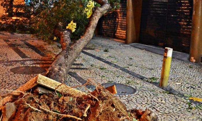 Uma árvore também despencou na Rua Francisco Sá, em Copacabana Foto do leitor Felipe Pilotto / Eu-Repórter