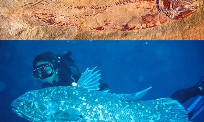 Cryptozoology Museum (Portland, Maine, EUA). A criptozoologia se ocupa do estudo dos seres fantásticos e dos possíveis animais reais que existiriam por trás do mito. É considerada por muitos cientistas sérios como uma pseudociência, mas às vezes acerta. O celacanto, um peixe contemporâneo dos dinossauros que se considerava extinto há 80 milhões de anos (acreditava-se que exemplares dissecados que chegaram a museus eram falsos), se comprovou real: em 22 de dezembro de 1938, um exemplar vivo foi capturado nas Ilhas Comores, onde existe uma população estável. Além da réplica de um celacanto, o museu traz falsas sereias dissecadas, um pé de Sasquatch e fotos do monstro do Lago Ness Divulgação