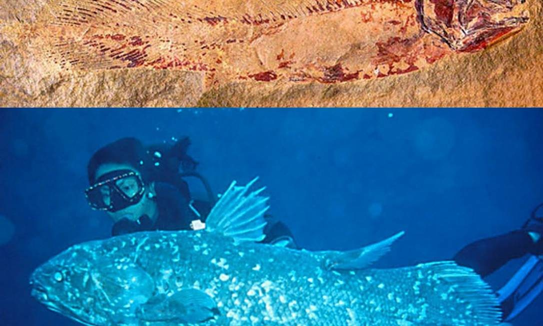 Cryptozoology Museum (Portland, Maine, EUA). A criptozoologia se ocupa do estudo dos seres fantásticos e dos possíveis animais reais que existiriam por trás do mito. É considerada por muitos cientistas sérios como uma pseudociência, mas às vezes acerta. O celacanto, um peixe contemporâneo dos dinossauros que se considerava extinto há 80 milhões de anos (acreditava-se que exemplares dissecados que chegaram a museus eram falsos), se comprovou real: em 22 de dezembro de 1938, um exemplar vivo foi capturado nas Ilhas Comores, onde existe uma população estável. Além da réplica de um celacanto, o museu traz falsas sereias dissecadas, um pé de Sasquatch e fotos do monstro do Lago Ness Foto: Divulgação
