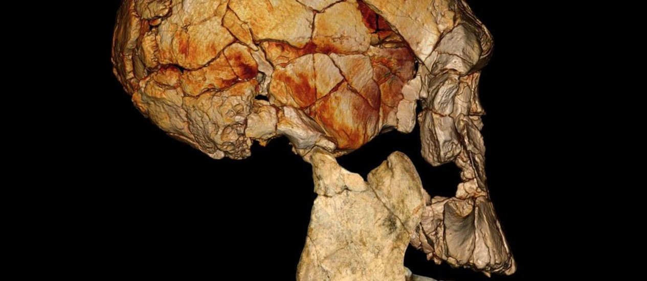 Imagem mostra o crânio reconstruído a partir de fóssil descoberto em 1972 que seria de uma nova espécie de hominídeo antigo Foto: Nature
