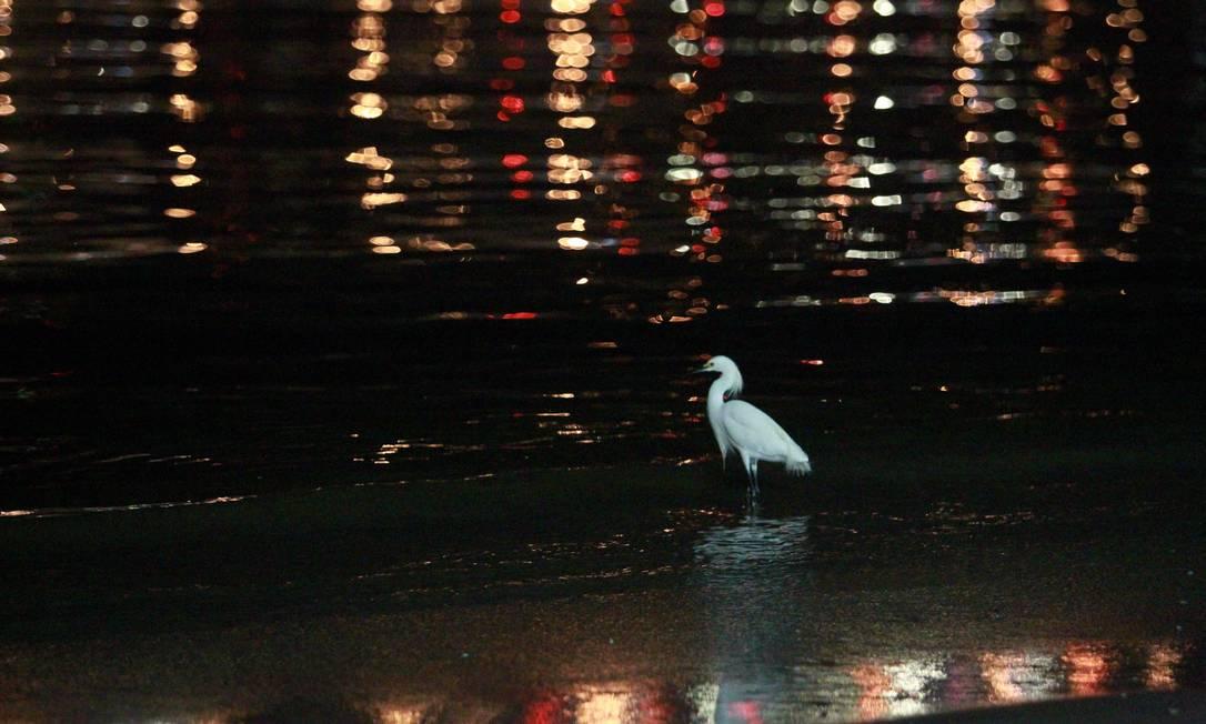 Pássaro anda pela água na Enseada de Botafogo Gabriel de Paiva / O Globo