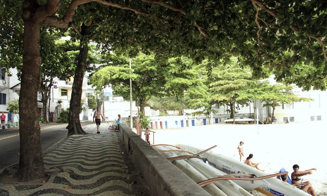 A amendoeira (Terminada catappa) é encontrada com tanta frequência na cidade que muitas pessoas acham que é nativa da Mata Atlântica. Na verdade, a árvore é asiática Maria Isabel F. Serra - Divulgação