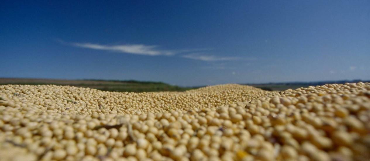 Soja. O consumo de água chega a 2,2 mil metros cúbicos por tonelada Foto: TYBA