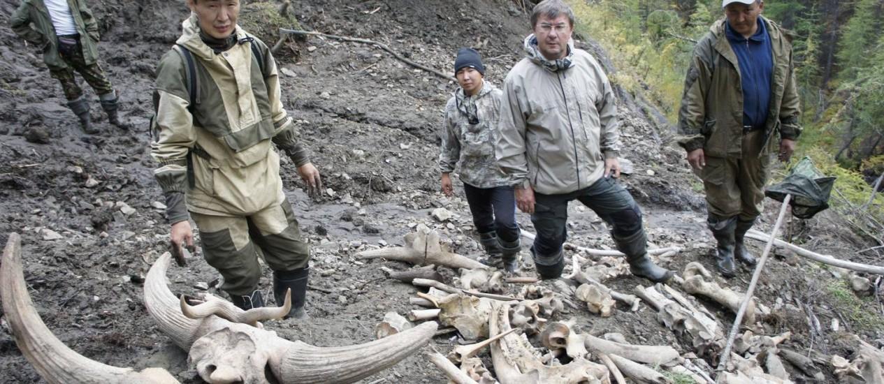 Restos de mamute encontrados na região de Yakutia, na Sibéria Foto: AFP