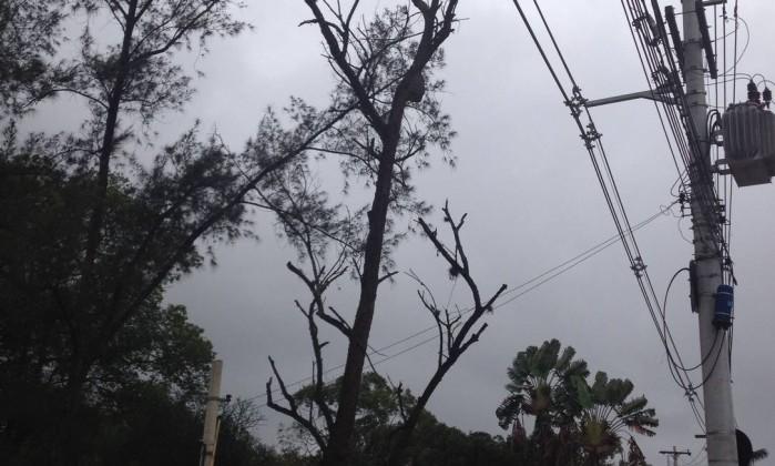 Árvore seca corre o risco de desabar sobre a rede elétrica na Avenida das Américas, próximo ao número 13.900, no Recreio Foto do leitor Edivaldo Galdino / Eu-Repórter