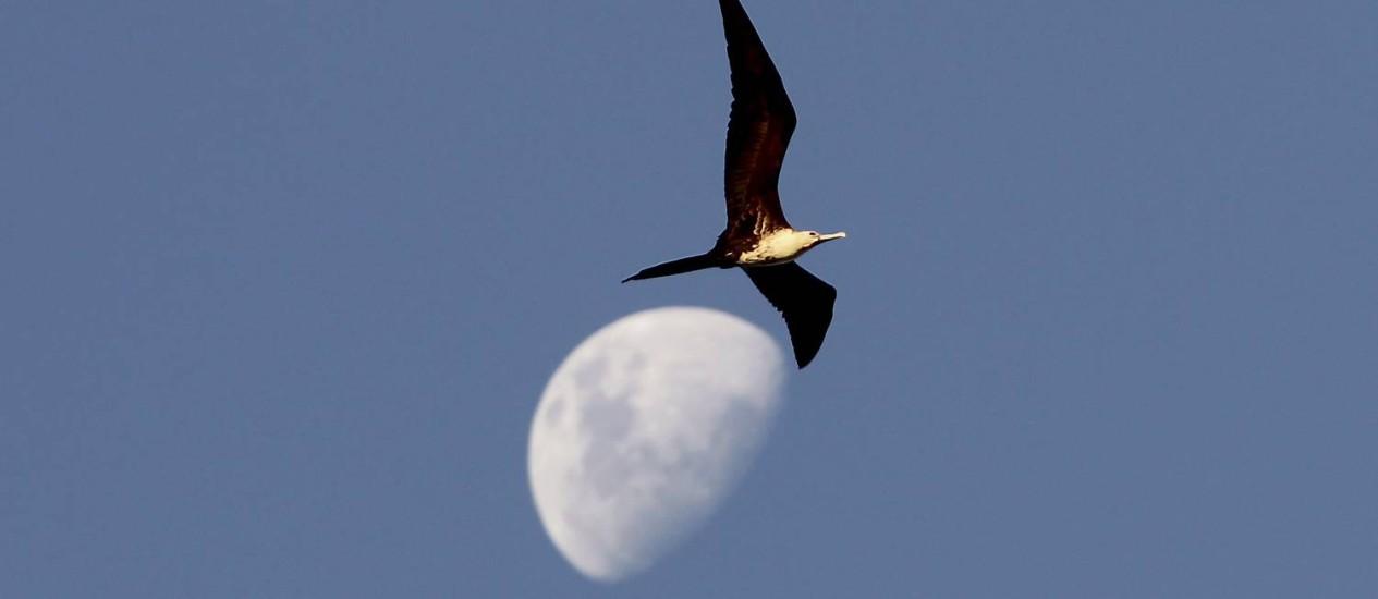 Às 18h20 Marte se esconderá atrás da Lua por 56 minutos Foto: Marcelo Theobald/ 30.05.2012