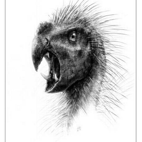 Pegomastax africanus: um dos menores dinossauros descobertos Foto: Reprodução/Desenho de Todd Marshall