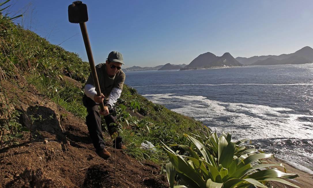 Domingos Sávio, o maior plantador de mudas da encosta do Pão de Açúcar. Todos os fins de semana, há dez anos, ele escala a face leste para cuidar da vegetação Foto: Custodio Coimbra / O Globo