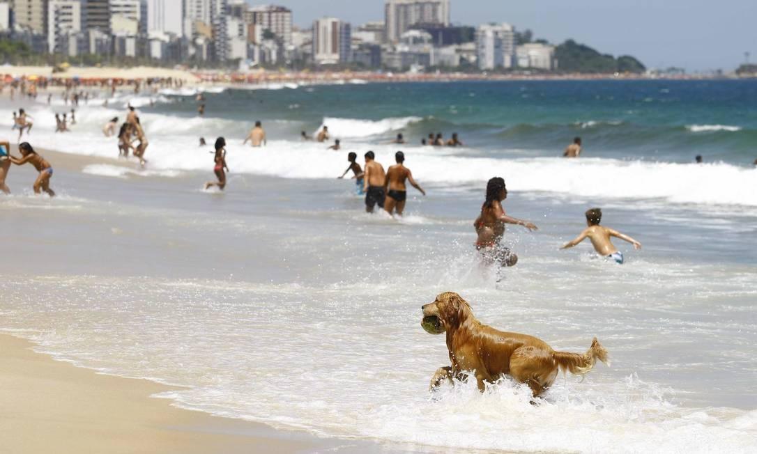 Falta de higiene. Cachorro brinca na praia do Leblon, apesar da proibição: fezes estão relacionadas a diarreias e outras doenças Foto: Pablo Jacob / 25-01-2012 / O Globo
