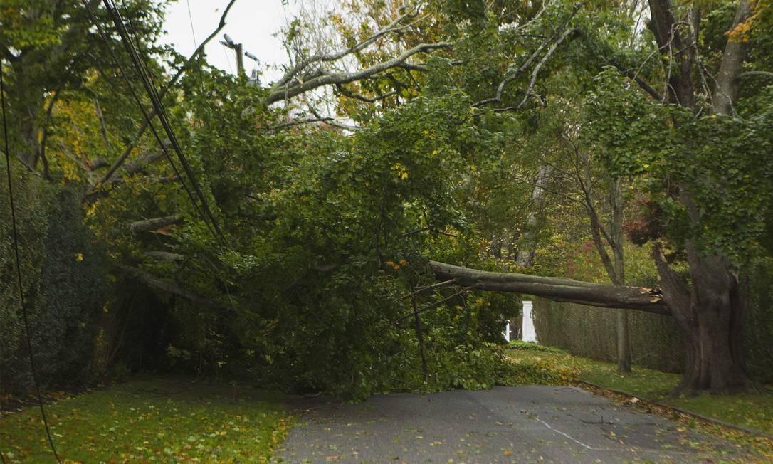 Ainda em Southampton, a queda de árvores prejudica o fluxo de vias em bairros residenciais Foto: Reuters