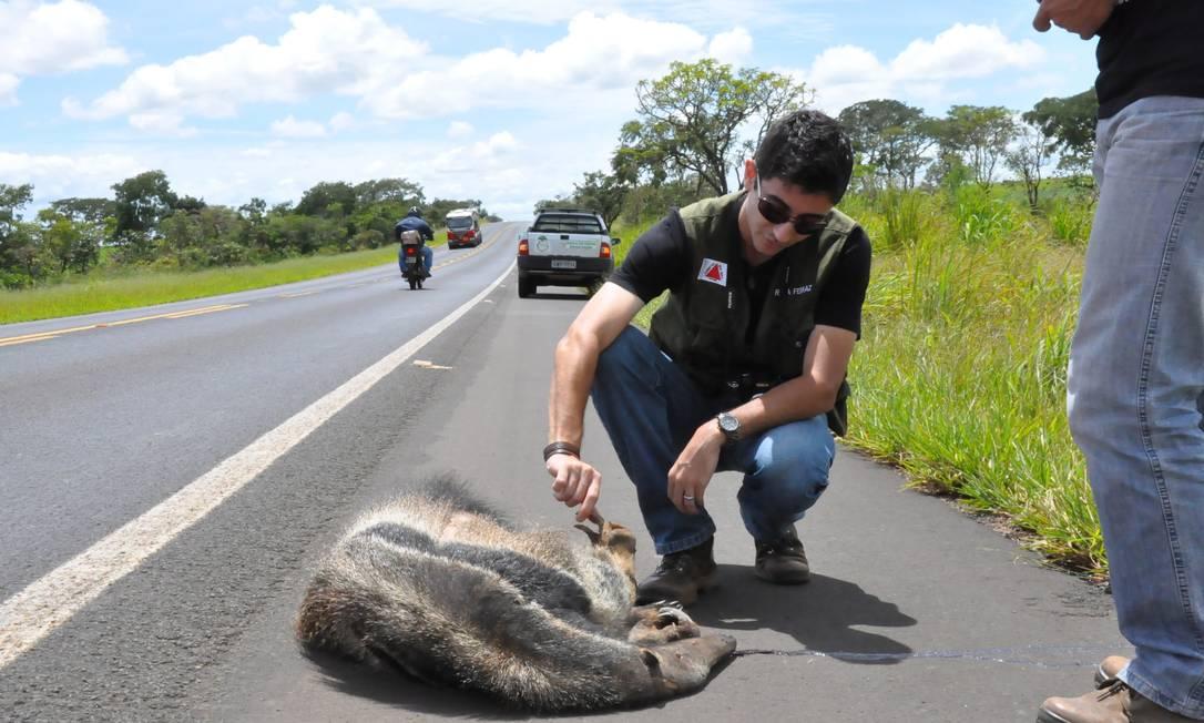 Rafael Ferraz estuda os atropelamentos em MG Foto: projeto atropelados/Rafael FerrAz