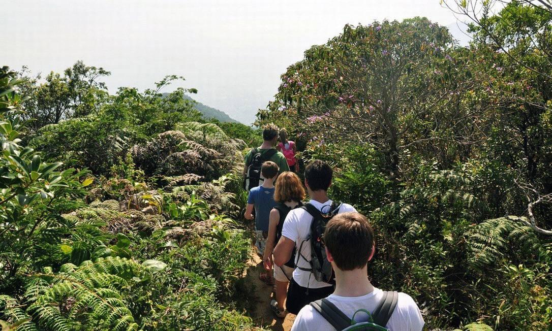 Trilhas no Parque Nacional da Tijuca são opções para quem gosta do contato com a natureza Foto: Alexandre Macieira / Divulgação Riotur