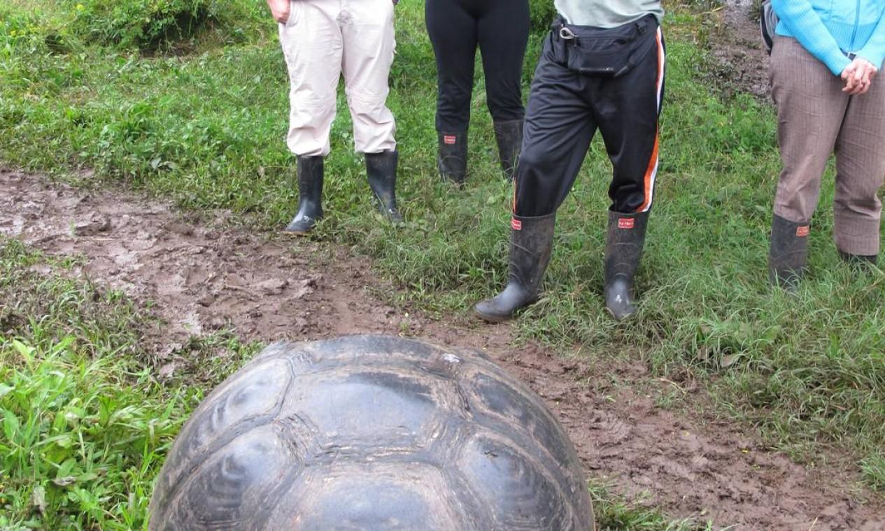 A parte alta de Santa Cruz é a terra das tartarugas-gigantes, símbolo de Galápagos Foto: Eduardo Maia / O Globo