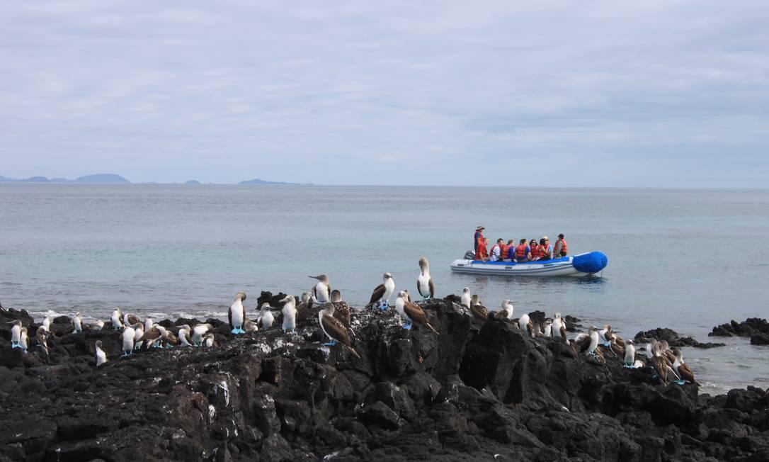 Turistas avistam uma colônia de atobás de pata azul na ilha de Santiago, em Galápagos Foto: Eduardo Maia / O Globo