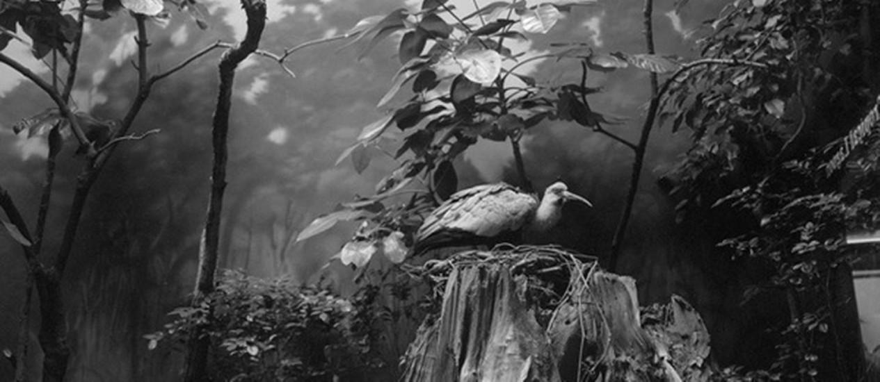 Natureza manipulada: uma das imagens da fotógrafa americana Paula McCartney Foto: Divulgação/ Paula McCartney