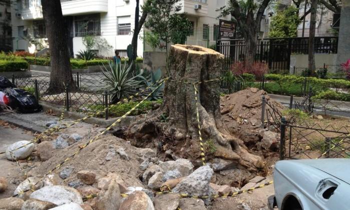 Aparentemente saudável, árvore antiga foi cortada na Rua General Glicério, em Laranjeiras Foto da leitora Michelle Chevrand / Eu-Repórter