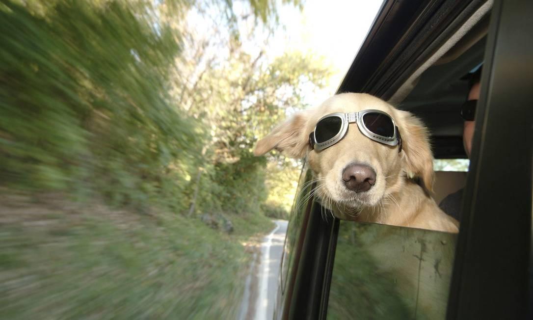 Cães que viajam com a família no carro precisam de atestado de saúde de veterinário Foto: Stock.sxchng