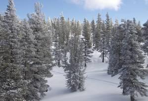 No teleférico é possível captar imagens como essa dos pinheiros da região Foto: Bruno Agostini / O Globo