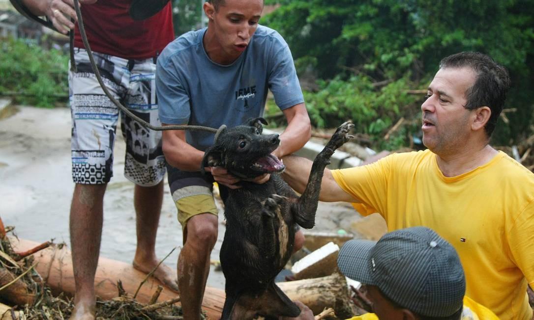 Cão é resgatado no bairro Café Torrado, fortemente castigado pelas chuvas Foto: Fernando Quevedo / O Globo