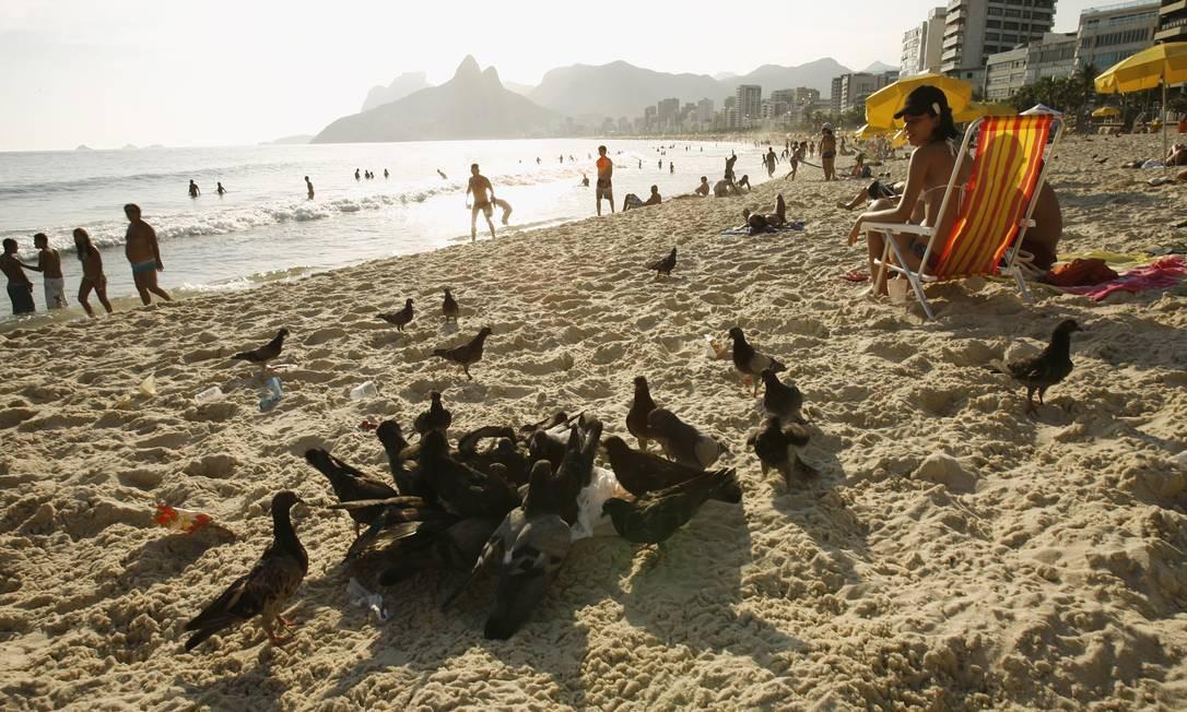 Praia do Arpoador. As aves brigam por saco plástico com restos de alimentos deixados por banhistas Foto: Berg Silva