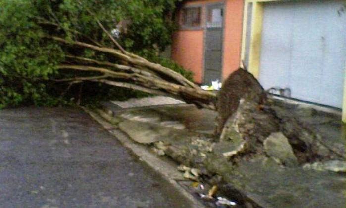 Chuva de segunda-feira derrubou árvore na Rua lmiro Bernardo, no bairro Senador Camará, em Bangu, e ainda não foi removida Foto do leitor Anderson Portugal / Eu-repórter