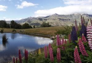 Lupines e o lago do Loi Suites Chapelco Golf Resort, em San Martín de los Andes, na Patagônia argentina. Foto: Ana Branco / O Globo
