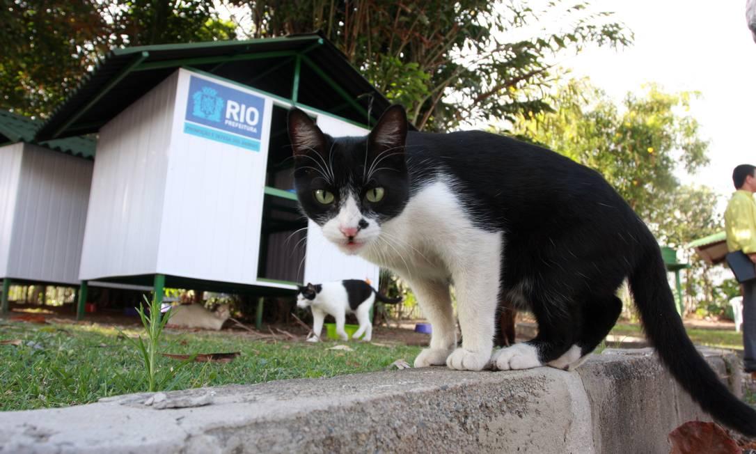 Inaugurado em junho de 2012, o Gatil São Francisco de Assis abriga cerca de 200 gatos, transferidos do Campo de Santana Foto: Rafael Moraes / O Globo