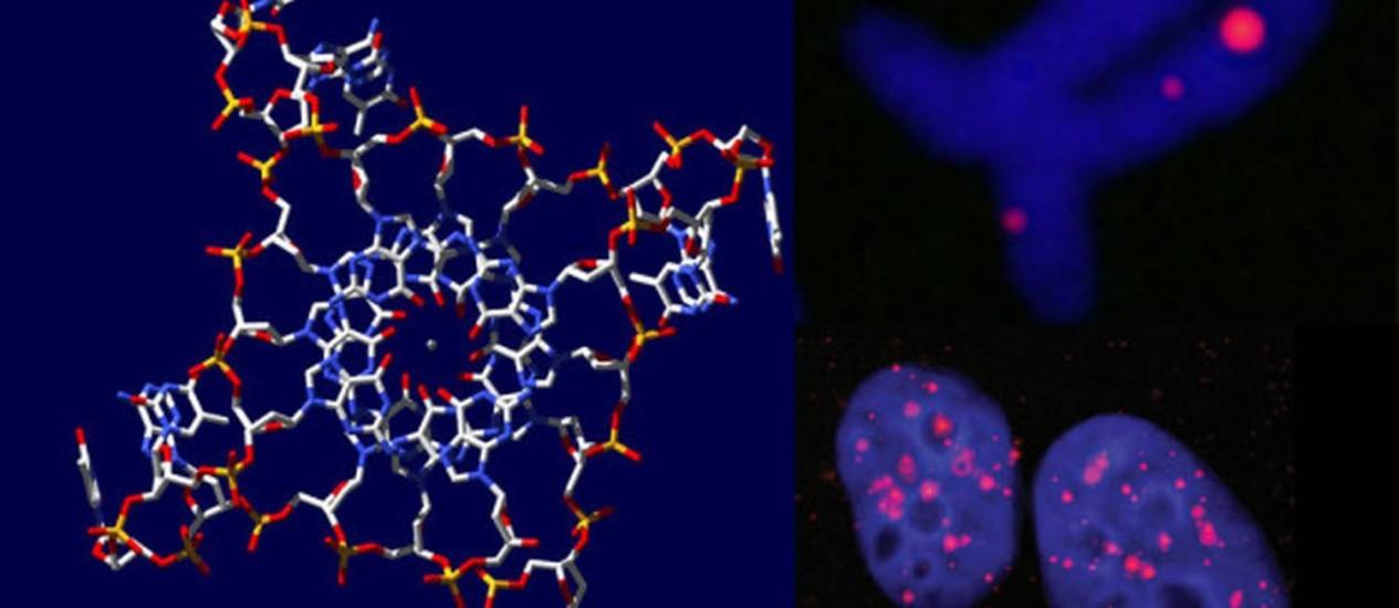 Ilustração da estrutura do DNA humano em hélice quádrupla, conforme estudo apresentado pela Universidade de Cambridge Foto: Reprodução
