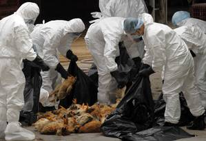 Agentes sanitários retiram aves de um mercado em Hong Kong porque um frango estava contaminado com o H5N1 Foto: TYRONE SIU / REUTERS