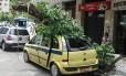 Árvore cai sobre táxi na Prado Júnior em Coapacabana