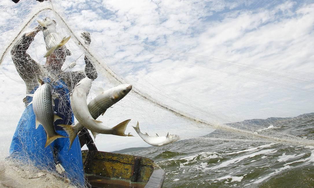 Pescadores de São Pedro da Aldeia voltam a ter fartura no pescado da lagoa de Araruama Foto: Pablo Jacob / Agência O Globo