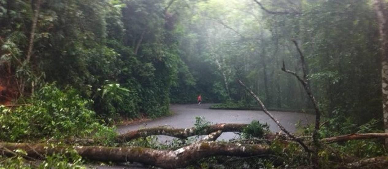 Queda de árvore fecha Estrada das Paineiras, no Rio Foto: Ana Lúcia Azevedo / O Globo
