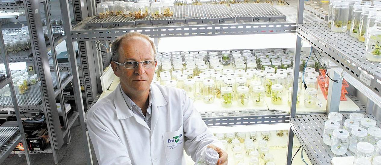 Coordenador de pesquisas de Recursos Genéticos e Biotecnologia da Embrapa, Elibio Rech defende uso da tecnologia para baixar custos e acelerar tratamentos. No laboratório, vidro com cultura de tecidos controlados Foto: Ailton de Freitas