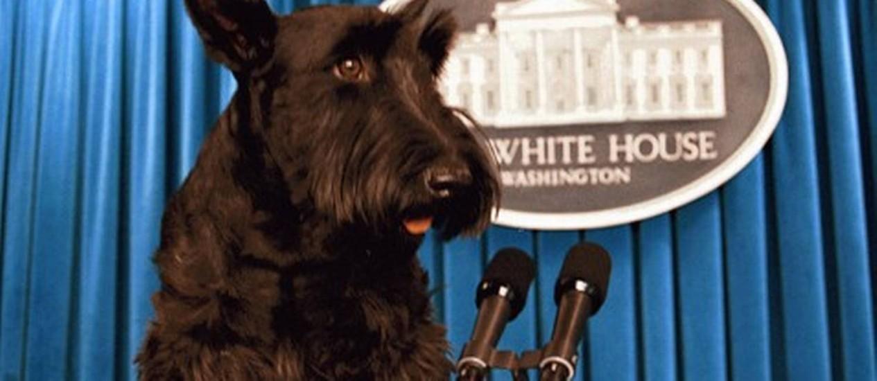 Barney Bush, o primeiro-cão, morreu de linfoma na sexta-feira aos 12 anos e meio Foto: Reprodução