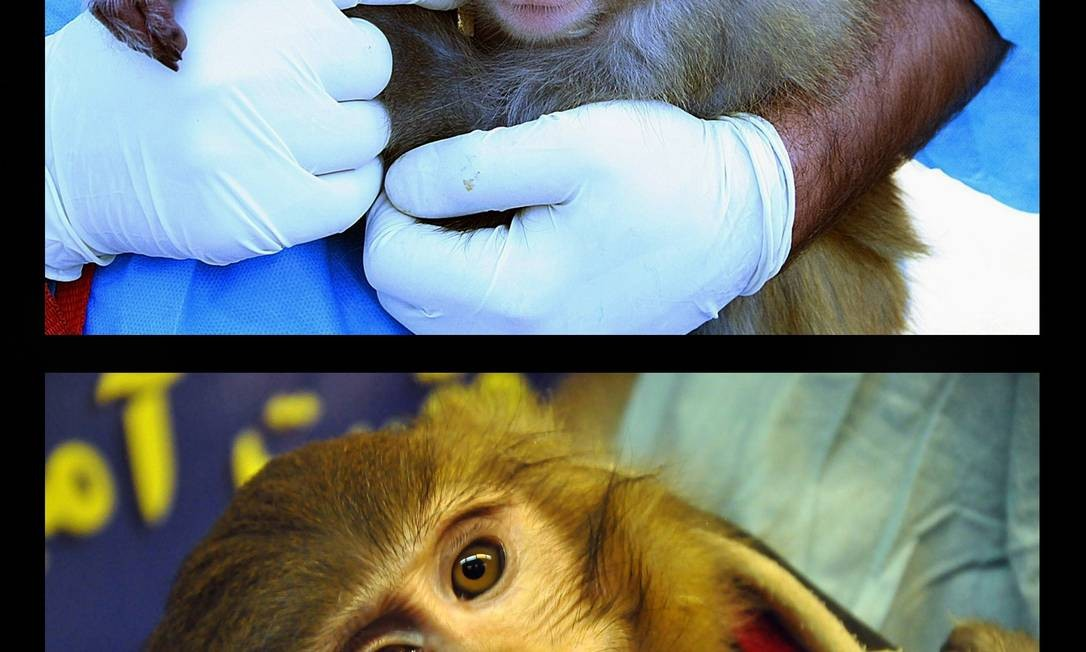 Imagens mostram diferenças no pelo e em mancha sobre o olho do bicho Foto: BORNA GHASSEMI / AFP