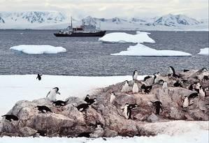Pinguins dominam a paisagem em Hydrurga Rocks, na Antártica Foto: Mari Campos
