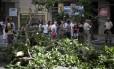 Moradores conseguiram a interrupção da derrudada da árvore, de origem amazônica.