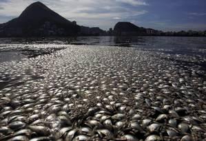 Mortandade de peixes aumenta na Lagoa Rodrigo de Freitas, na altura da Colônia de Pesca, no Parque dos Patins Foto: Gabriel de Paiva / O Globo