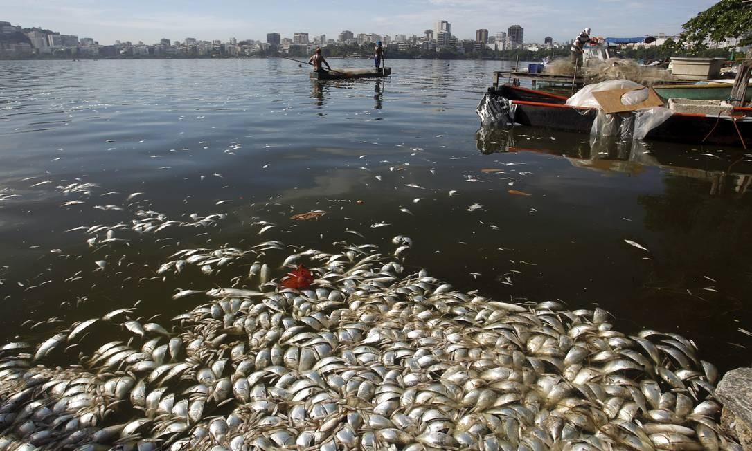 Peixes mortos são vistos na altura da Colônia de Pesca, perto do Parque dos Patins Foto: Gabriel de Paiva / Agência O Globo