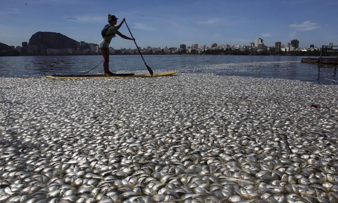 Praticante de stand up paddle passa perto de peixes mortos na lagoa Foto: Gabriel de Paiva / O Globo