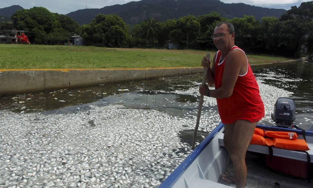 O espelho d'água da lagoa está tomado por peixes mortos de várias espécies Foto: Gabriel de Paiva / O Globo