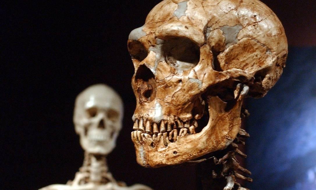 Um esqueleto do homem de Neandertal reconstruído e, atrás, a versão do humano moderno, com olhos bem menores: diferença chega a 6mm de cima a baixo Foto: Frank Franklin II / AP