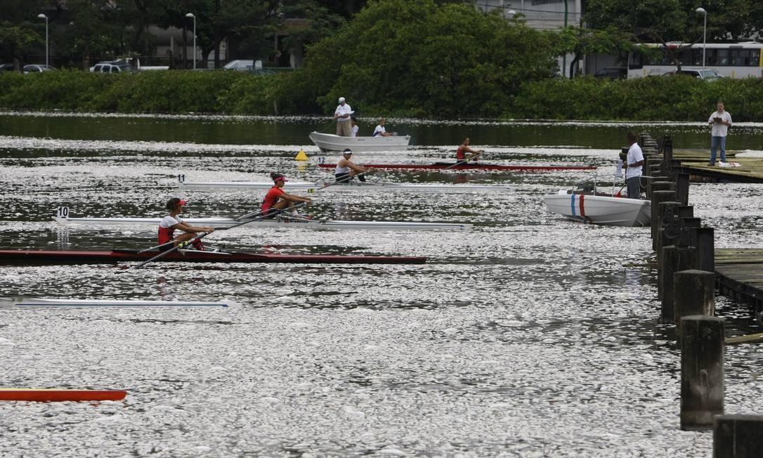 Atletas remam na Lagoa Rodrigo de Freitas lotada de peixes mortos Foto: Hudson Pontes / Agência O Globo