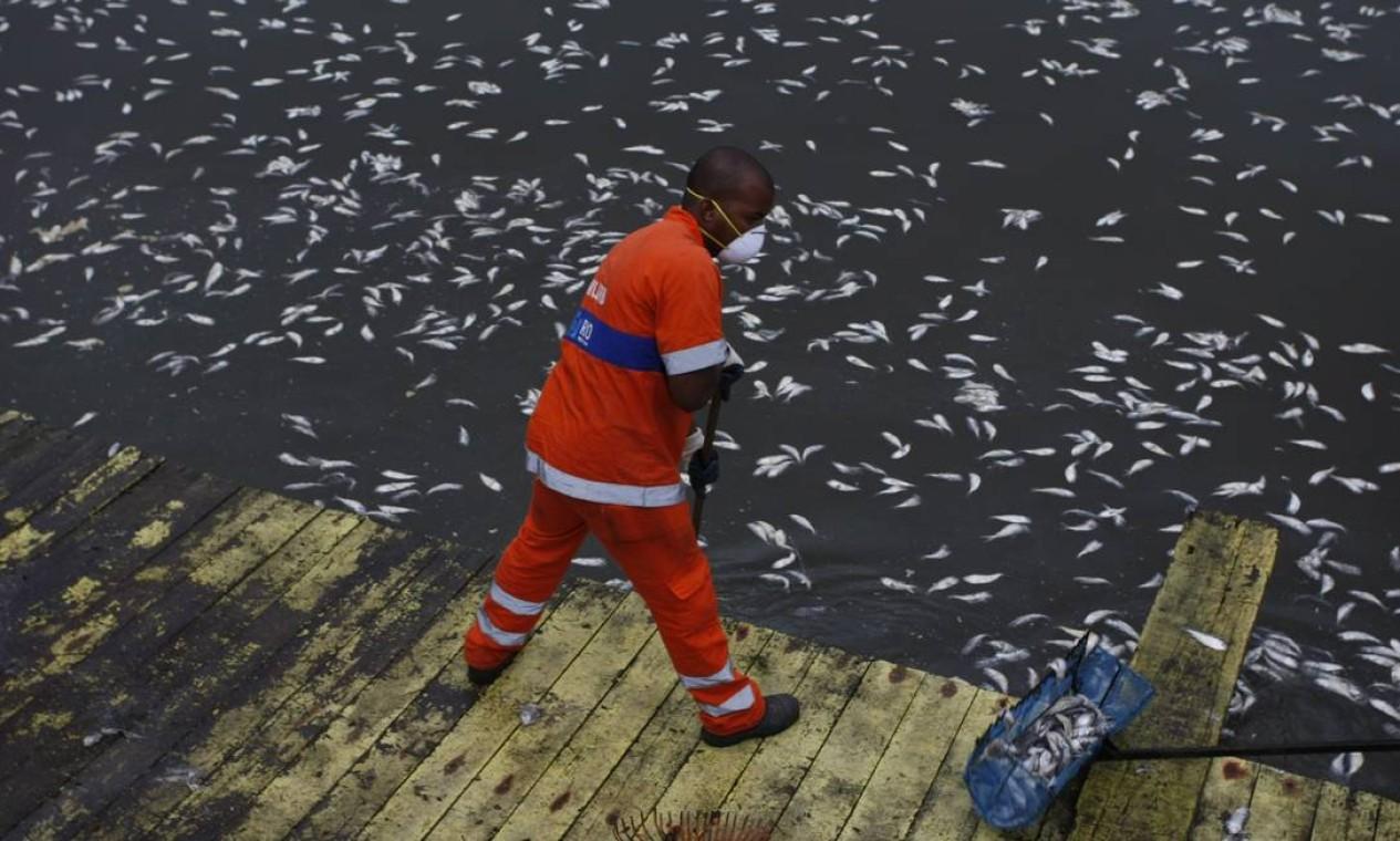 Funcionário da Comlurb recolhe os peixes mortos na Lagoa Foto: Hudson Pontes / Agência O Globo